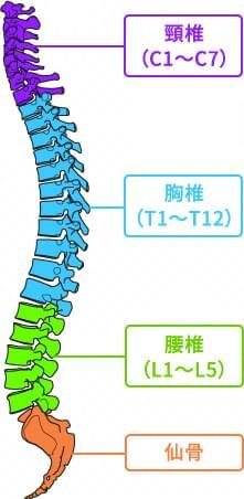 骨盤・背骨が歪む事で起こる症状の一例